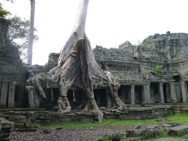 Angkor Wat bewachsen