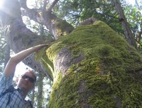Faszination Vancouver Island 8