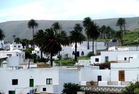 Lanzarote_Haria mit Palmen_Bettina Bork