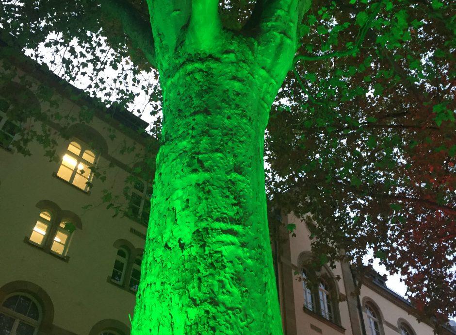 """""""Bonn leuchtet"""" ein ganzes Wochenende lang in bunten Farben 5"""