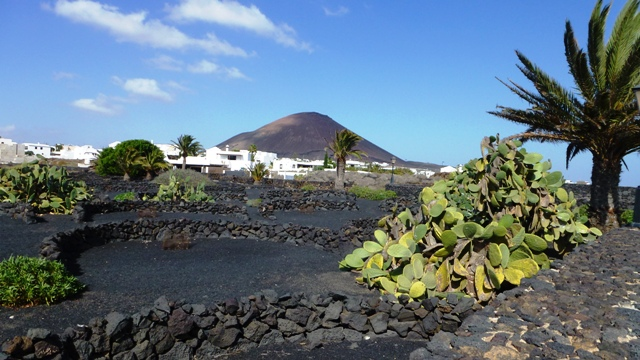 Typisch Lanzarote: Schwarze Vulkanberge, weiße Häuser und grüne Kakteen. (Foto: KULTREISEblog)