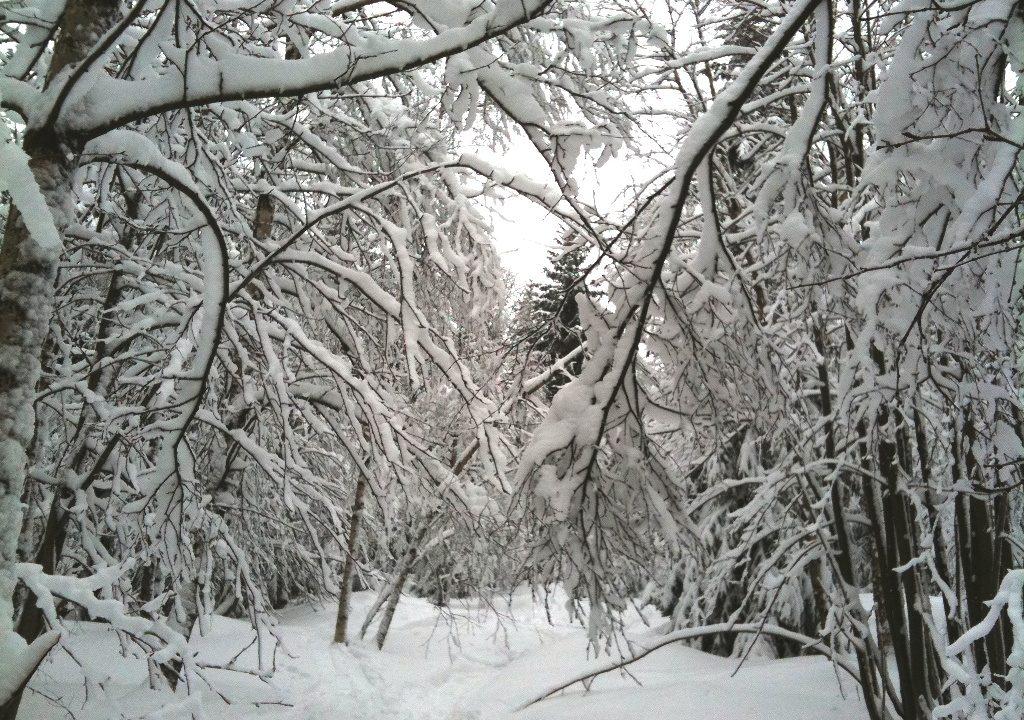 Beste Wintersportbedingungen in Deutschland 15