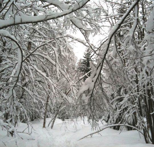 Beste Wintersportbedingungen in Deutschland 12