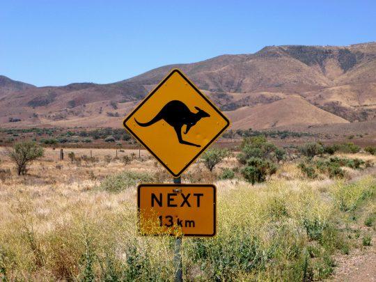 Kangaroos next 13 km, Australien