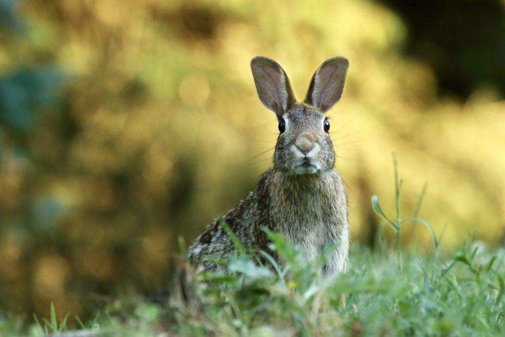 Frohe Ostern und warum der Osterhase Eier legt 2