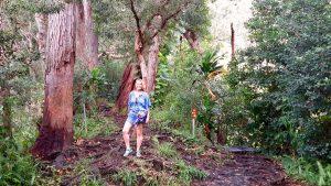 Hawaii: Tipps für eine Reise ins Paradies 21