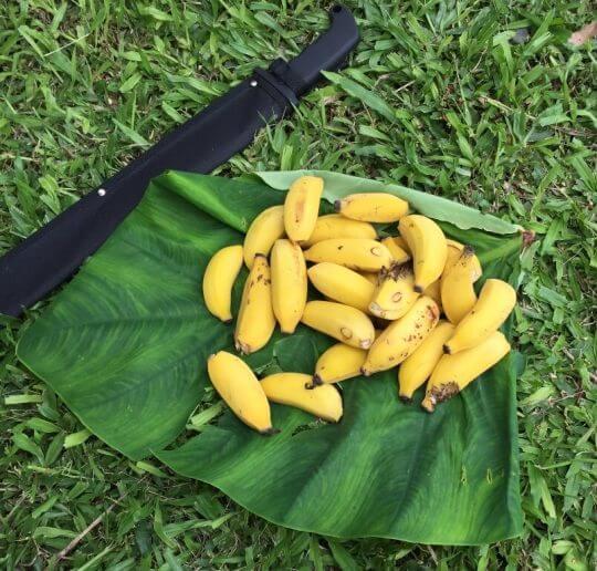 Köstlichkeiten auf Hawaii - meine kulinarischen Highlights 10