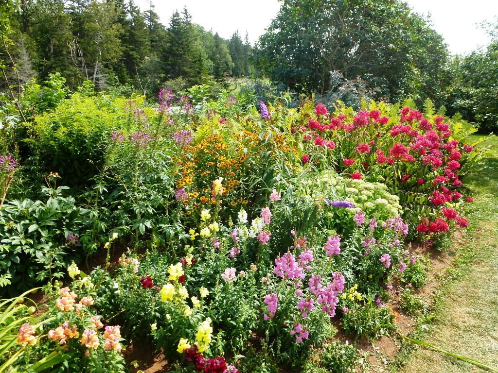 Wildblumen auf der Farm von Anne of Green Gables auf PEI