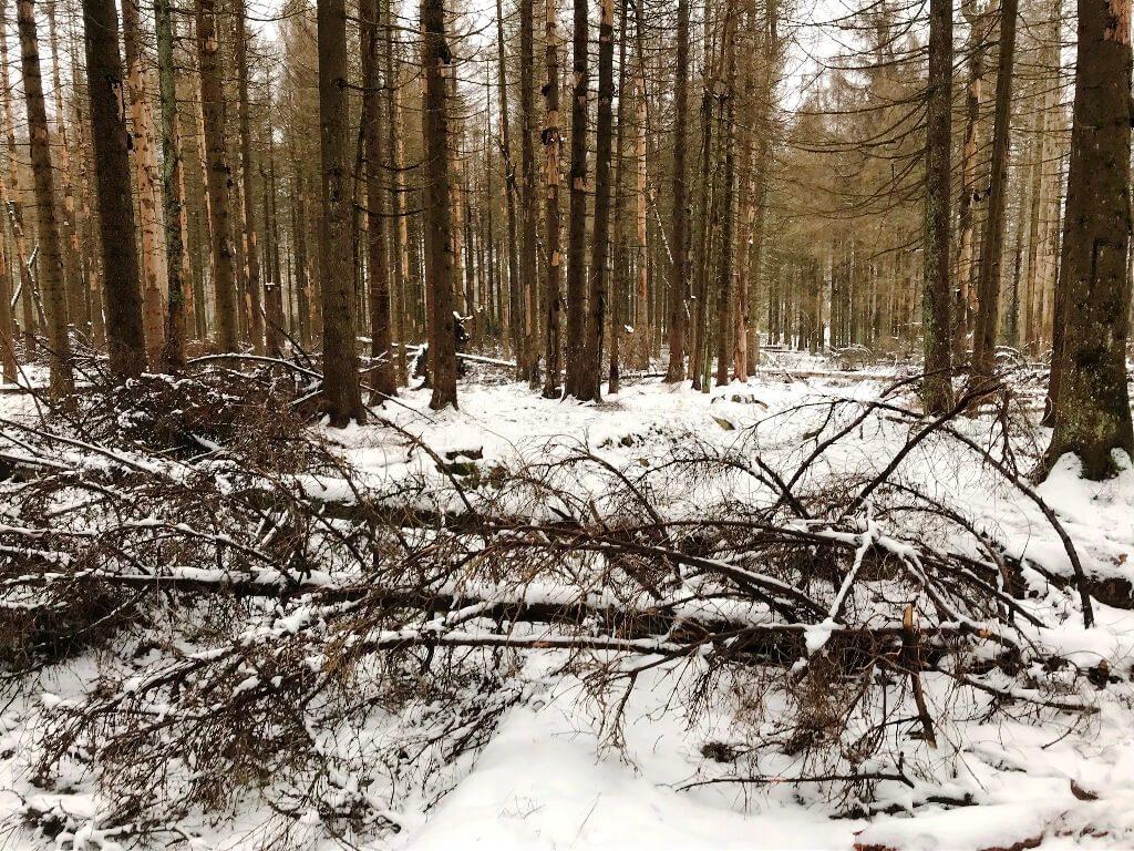 Sturmtief Sabine und das große Waldsterben  #Kultding des Monats 1