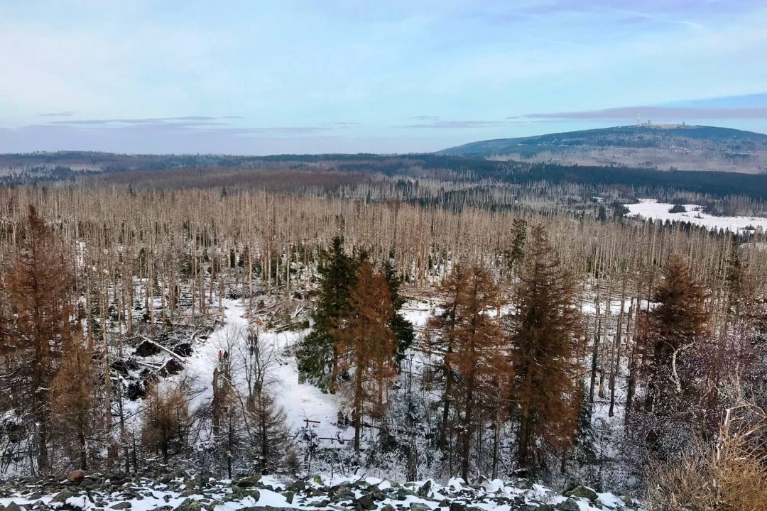 Waldsterben im Nationalpark Harz (Foto Kultreiseblog)