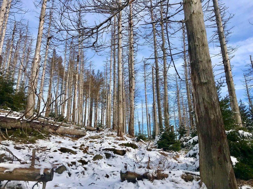 Sturmtief Sabine und das große Waldsterben  #Kultding des Monats 3