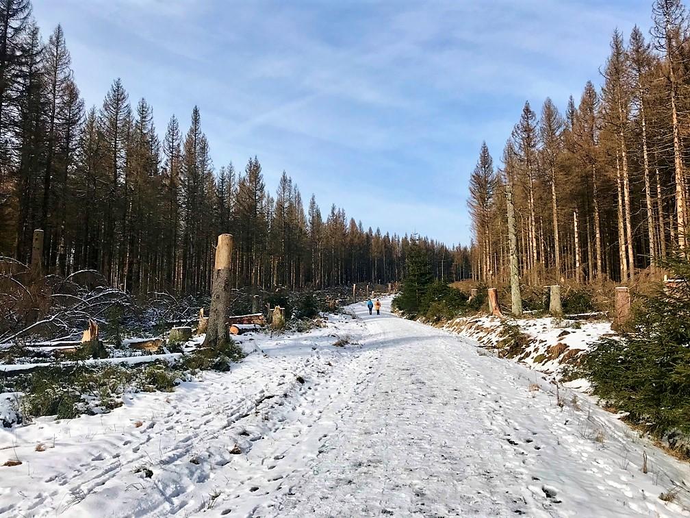 Wandern im Harz kurz vor dem Sturmtief im Februar 2020. (Foto Kultreiseblog)