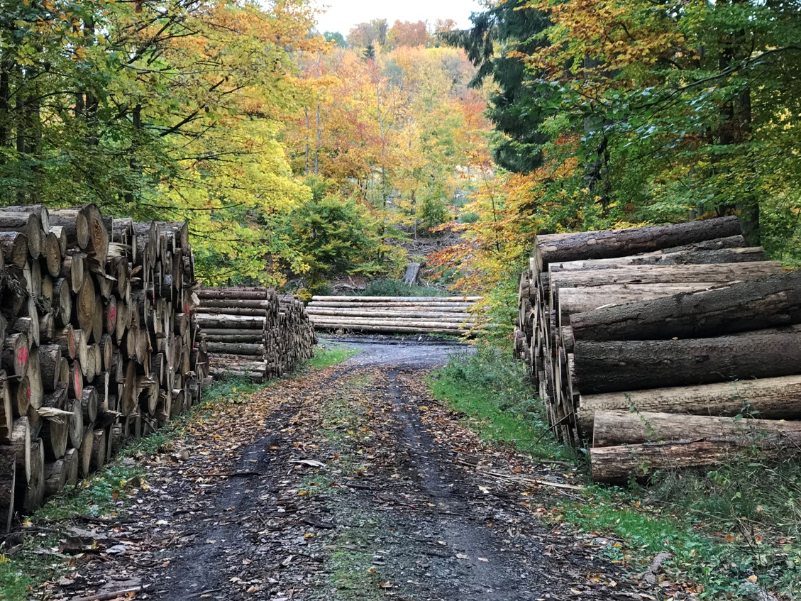 Herbst im Elm, Oktober 2020 (Foto Kultreiseblog)