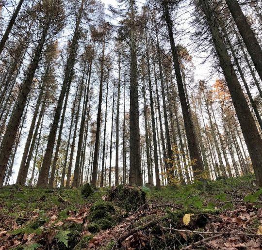 Waldzustand aktuell Foto Kultreiseblog