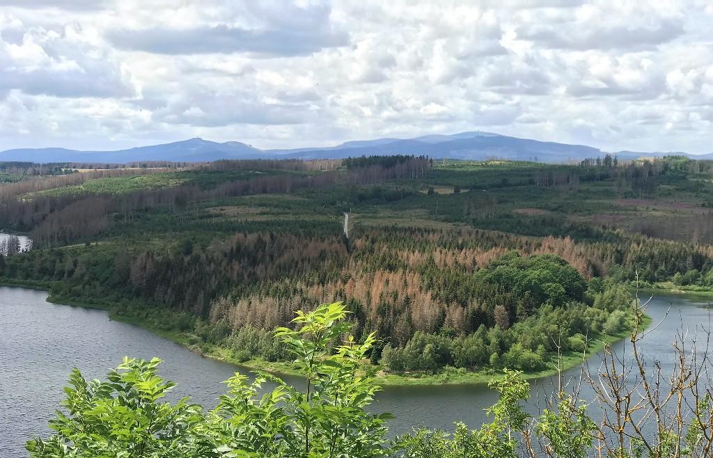Waldsterben im Harz in der Nähe der Rappbodetalsperre (Foto Kultreiseblog)